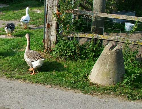Roadblock at Rickney