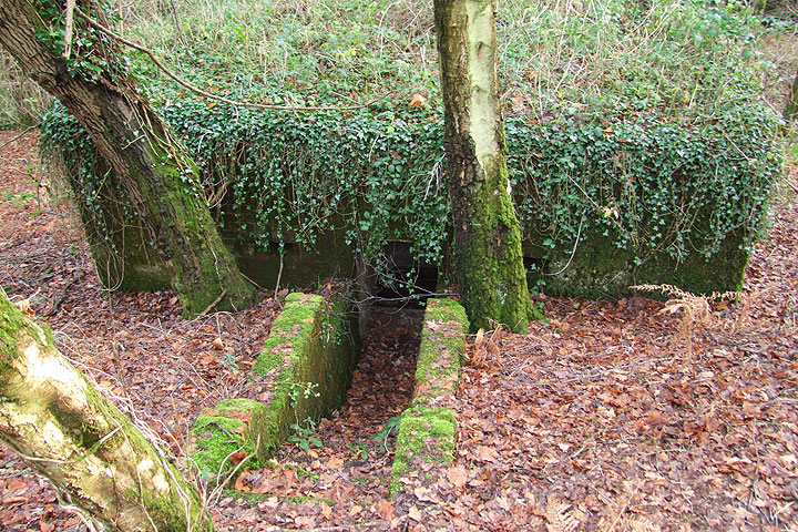 Pillbox at Old Lodge Warren